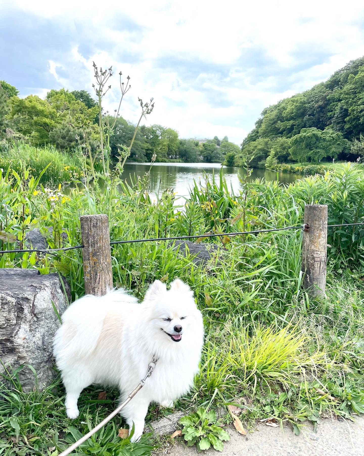 じゅん菜池公園をお散歩したよ
