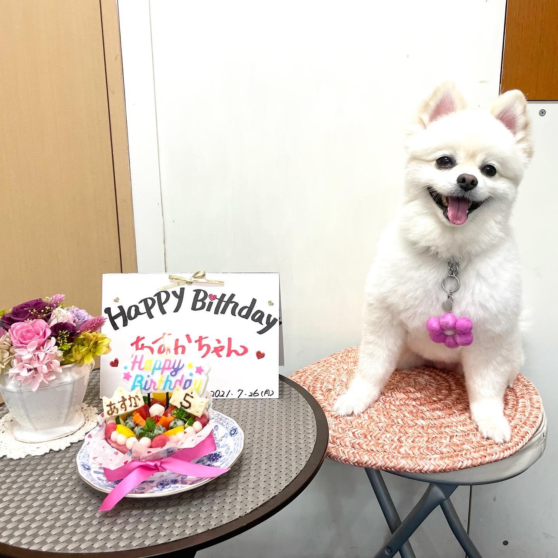 5歳のお誕生日を迎えました